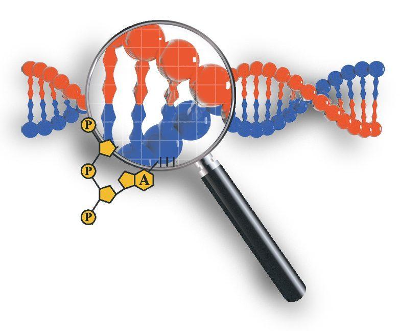 genetic information spot